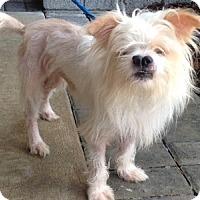 Adopt A Pet :: Alaska - Clermont, FL