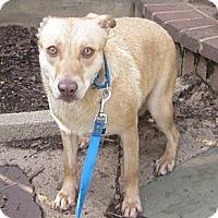 Adopt A Pet :: The Amazing Katie - Oak Ridge, NJ