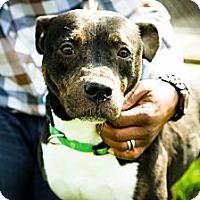 Adopt A Pet :: KC - Lake Odessa, MI
