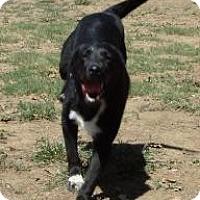 Adopt A Pet :: Cole - Justin, TX