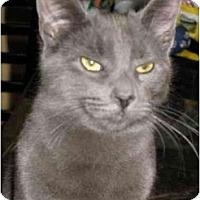 Adopt A Pet :: Skylar - Manalapan, NJ