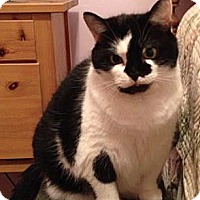 Adopt A Pet :: Jamie - Merrifield, VA