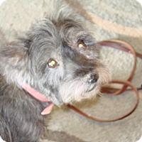 Adopt A Pet :: Chloe - Chandler, AZ