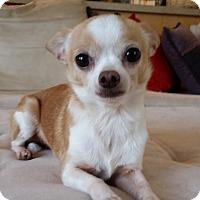 Adopt A Pet :: Cooper - Dayton OH - Dayton, OH
