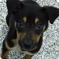 Adopt A Pet :: brothers - Washington, PA