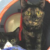 Adopt A Pet :: Chelsea - Conroe, TX