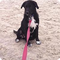Adopt A Pet :: Tiny - Elk River, MN
