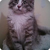 Adopt A Pet :: Hona - Richmond, VA