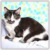 Adopt A Pet :: Luminara - Glendale, AZ