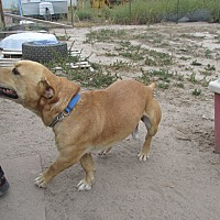 Adopt A Pet :: Hank - Pie Town, NM