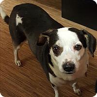 Adopt A Pet :: Zoe - Sussex, NJ