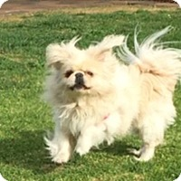 Adopt A Pet :: PRINCE BUG BUG - SO CALIF, CA