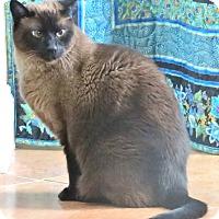 Adopt A Pet :: Bagheera - Davis, CA