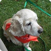Adopt A Pet :: Carter - Kannapolis, NC