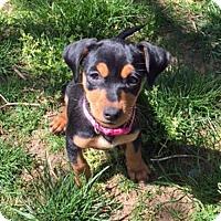 Adopt A Pet :: Natalia aka Lucy - Oakhurst, NJ