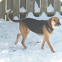 Adopt A Pet :: Maggie - Cambridge, ON