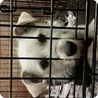 Adopt A Pet :: Ice Cream - Pembroke, GA