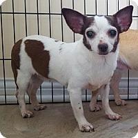 Adopt A Pet :: Taffy - Louisville, KY - Dayton, OH