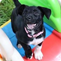 Adopt A Pet :: Jetta - Austin, TX