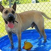 Adopt A Pet :: Beethoven - Umatilla, FL