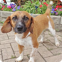 Adopt A Pet :: Glenwood - West Chicago, IL