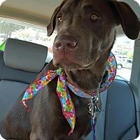 Adopt A Pet :: Moose - Cumming, GA