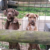Adopt A Pet :: Spices Babies/Cumin - Phoenxville, PA