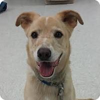 Adopt A Pet :: Eleanor - Austin, TX