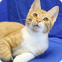 Adopt A Pet :: Rusty - Winston-Salem, NC