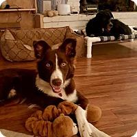 Adopt A Pet :: Tobie - Allen, TX
