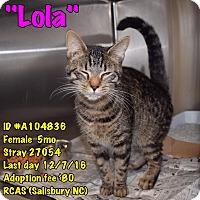 Adopt A Pet :: lola - Salisbury, NC