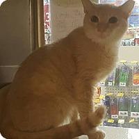 Adopt A Pet :: Dylan - Griffin, GA