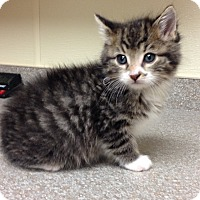 Adopt A Pet :: Donald - Larned, KS