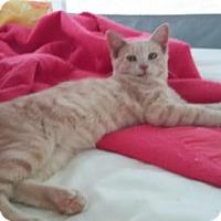 Adopt A Pet :: Sonny - Fairmont, WV