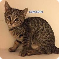 Adopt A Pet :: Cragen - Merrifield, VA