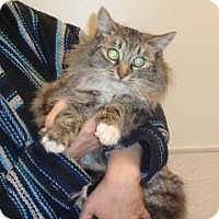 Adopt A Pet :: Norma Jean - Wildomar, CA