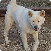 Adopt A Pet :: Leia - Romoland, CA