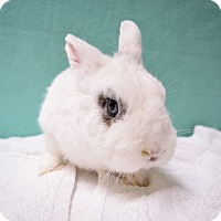 Adopt A Pet :: S'mores - Fountain Valley, CA