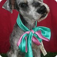 Adopt A Pet :: CHESTER - San Diego, CA