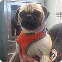 Adopt A Pet :: Rex - Gardena, CA