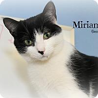 Adopt A Pet :: Miriam - Glen Mills, PA