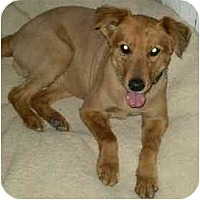 Adopt A Pet :: Taffy - Gilbert, AZ