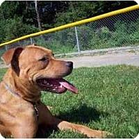 Adopt A Pet :: Shayla - Raymond, NH