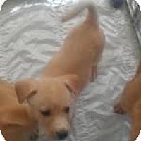Adopt A Pet :: Griffin - Phoenix, AZ