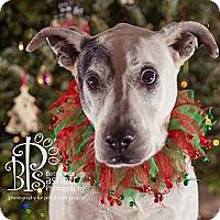 Adopt A Pet :: Petey - Tallahassee, FL