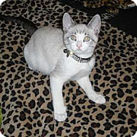Adopt A Pet :: Ashya - Davis, CA