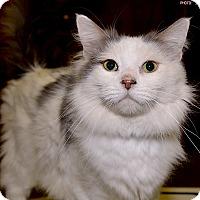 Adopt A Pet :: Neville - Medina, OH