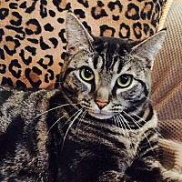 Adopt A Pet :: Lyndsey - Staten Island, NY