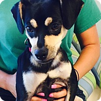 Adopt A Pet :: Leo - Jupiter, FL