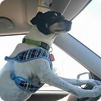 Adopt A Pet :: McGhee - Toledo, OH